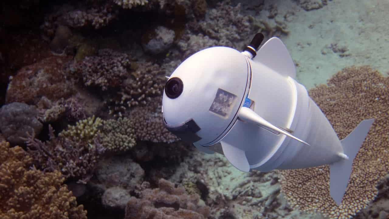 pesci robot