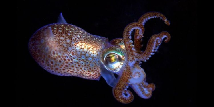 spazio calamaro luminescente